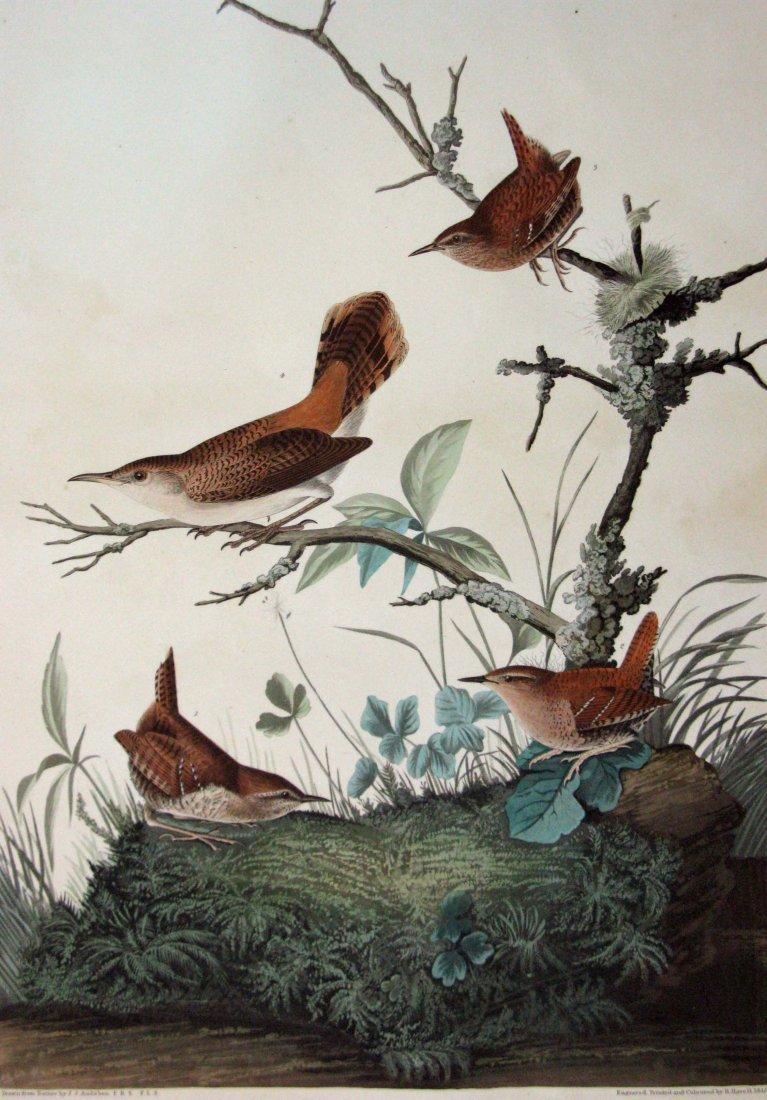 JOHN JAMES AUDUBON HAVELL WINTER WREN ROCK WREN 1826-38 - 2