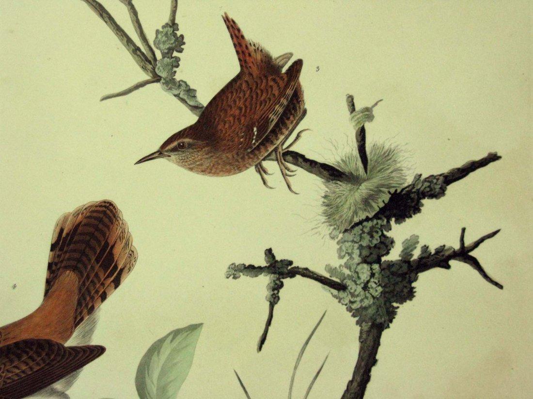 JOHN JAMES AUDUBON HAVELL WINTER WREN ROCK WREN 1826-38 - 5
