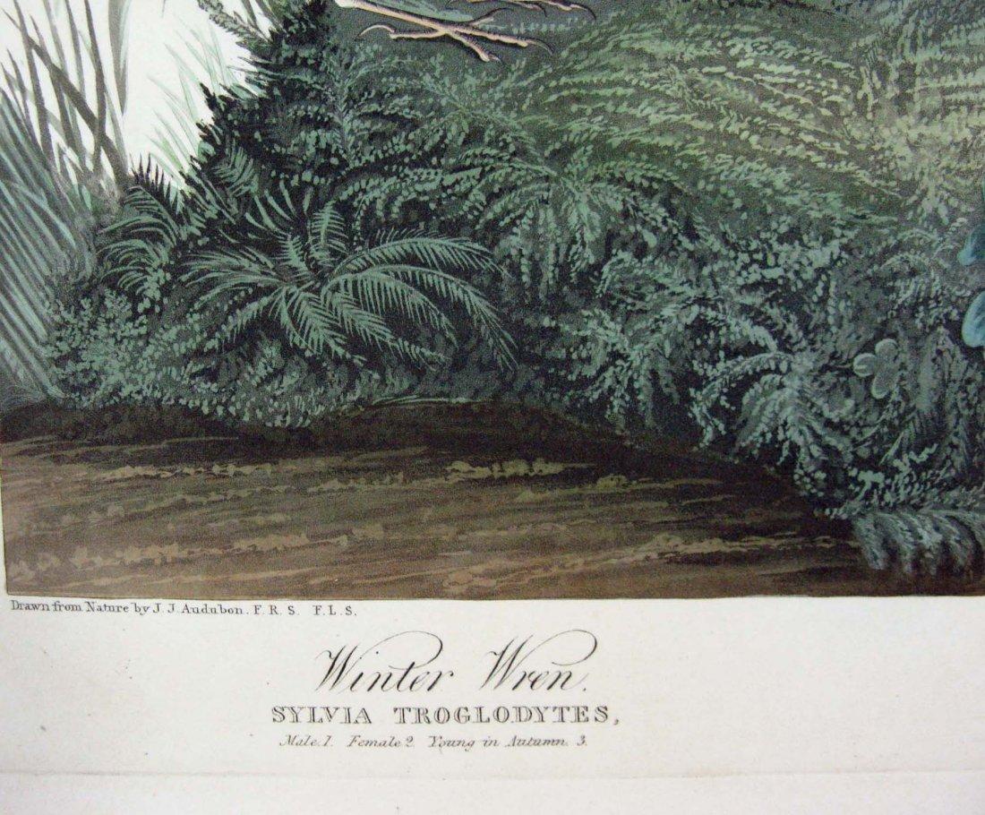 JOHN JAMES AUDUBON HAVELL WINTER WREN ROCK WREN 1826-38 - 8