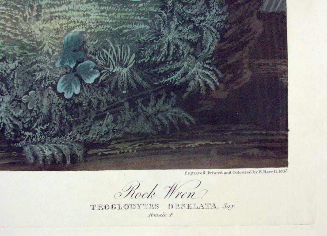 JOHN JAMES AUDUBON HAVELL WINTER WREN ROCK WREN 1826-38 - 9
