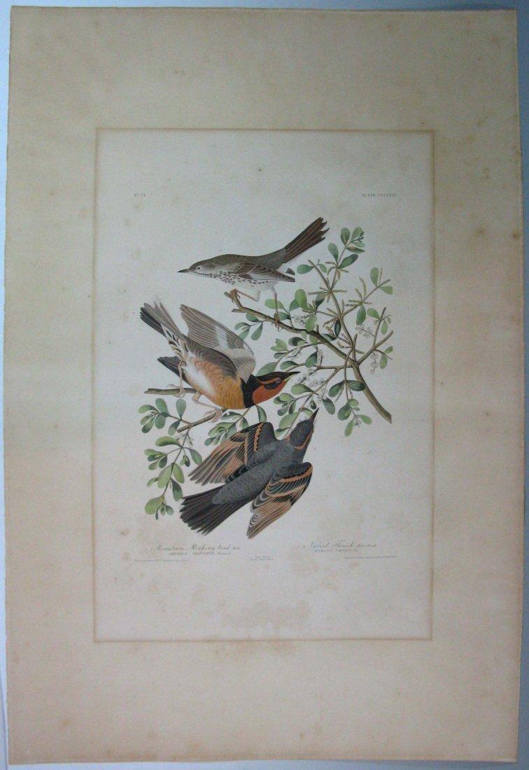 JOHN JAMES AUDUBON HAVELL MOCKINGBIRD & THRUSH 1826-38