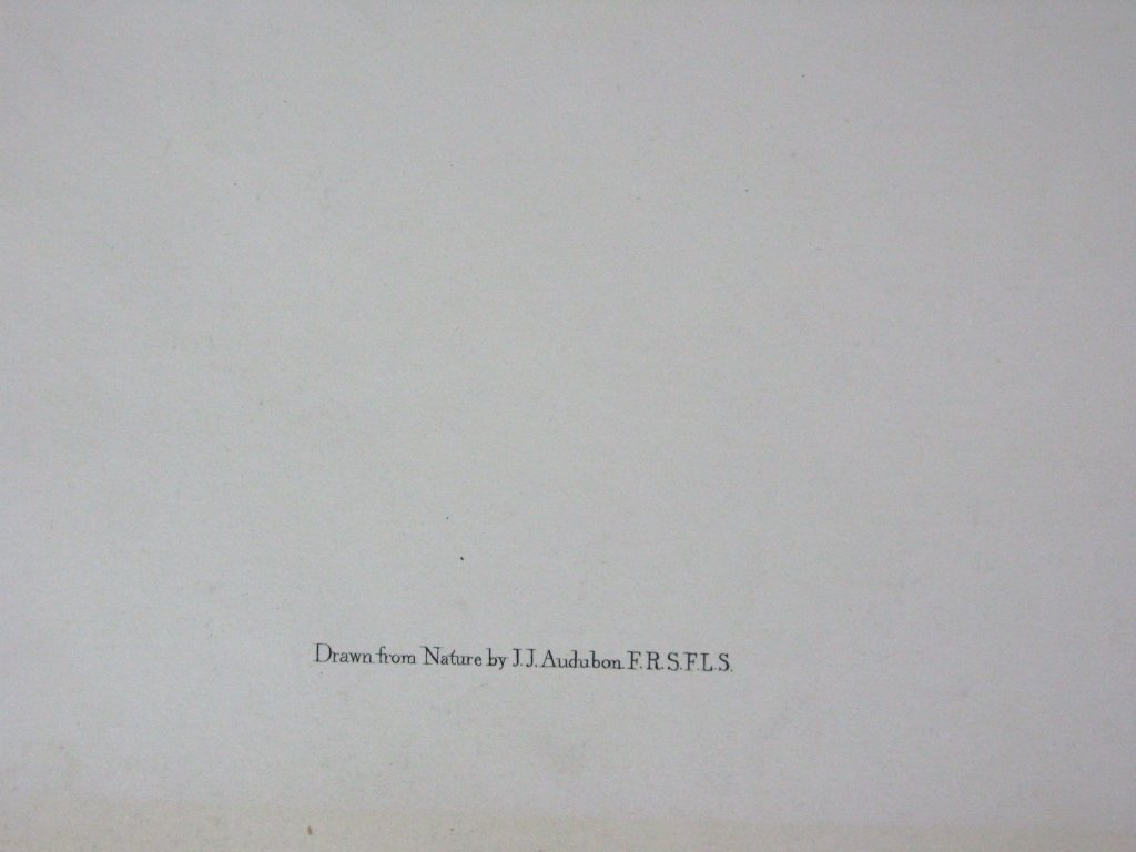 JOHN JAMES AUDUBON VIRGINIAN OPOSSUM J. T. BOWEN - 5