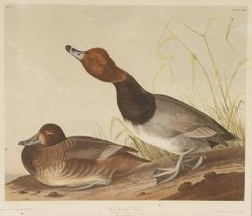 After John James Audubon