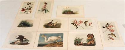 Hand Colored Prints, After John James Audubon