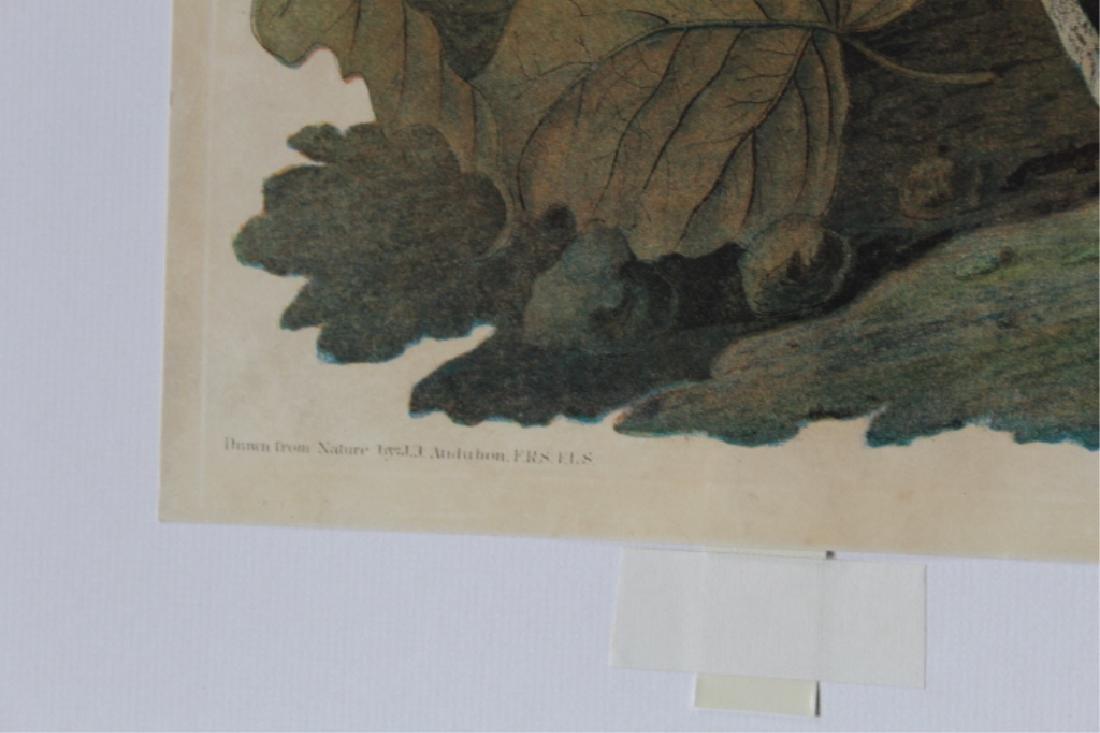John James Audubon - 4