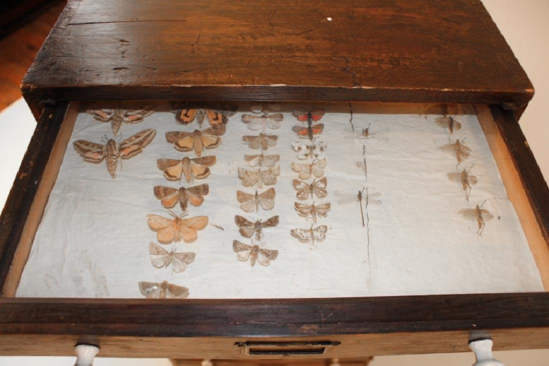 Rare Victorian Taxidermy Insect Collectors Cabinet - 2