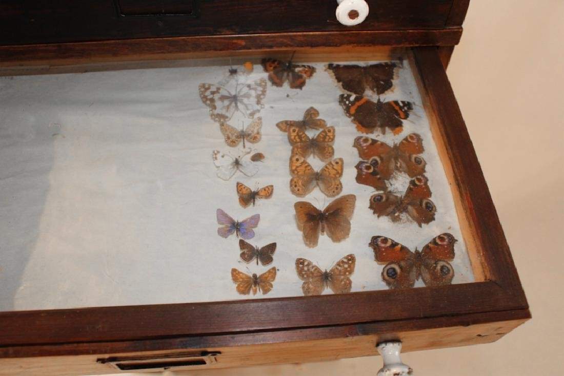 Rare Victorian Taxidermy Insect Collectors Cabinet - 3