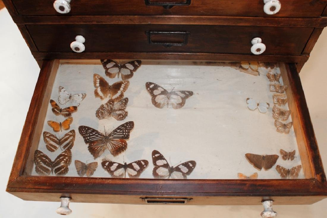 Rare Victorian Taxidermy Insect Collectors Cabinet - 4