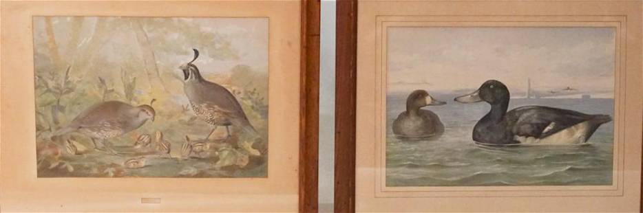 Two Antique Chromolithographs by Alexander Pope