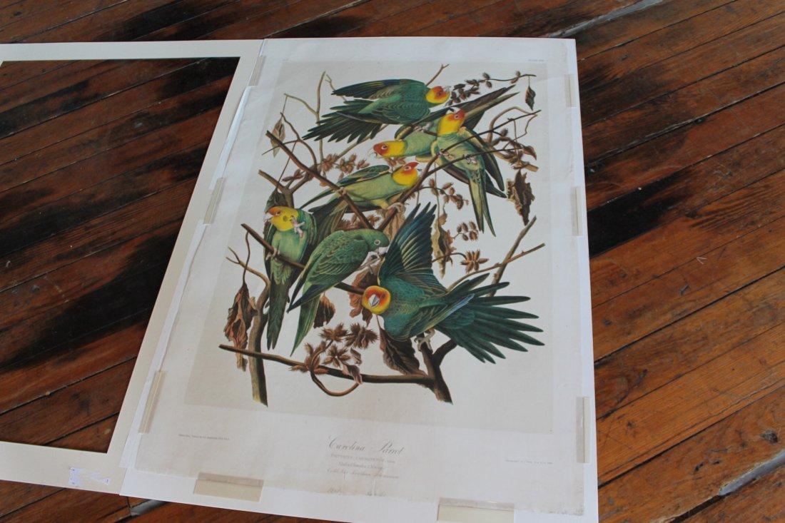 John James Audubon, Bien Edition, Carolina Parrot - 10