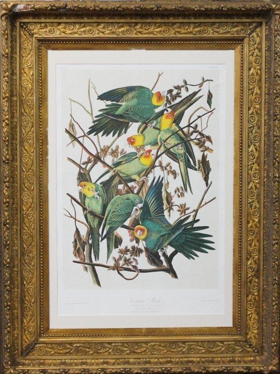 John James Audubon, Bien Edition, Carolina Parrot