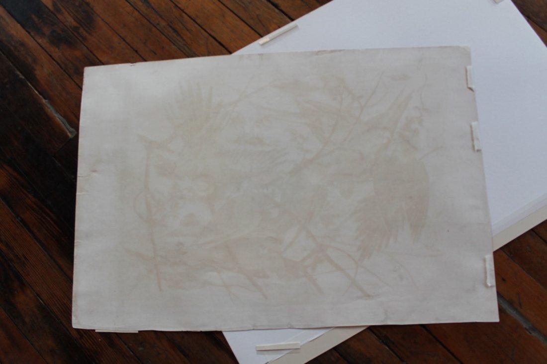 John James Audubon, Bien Edition, Carolina Parrot - 9