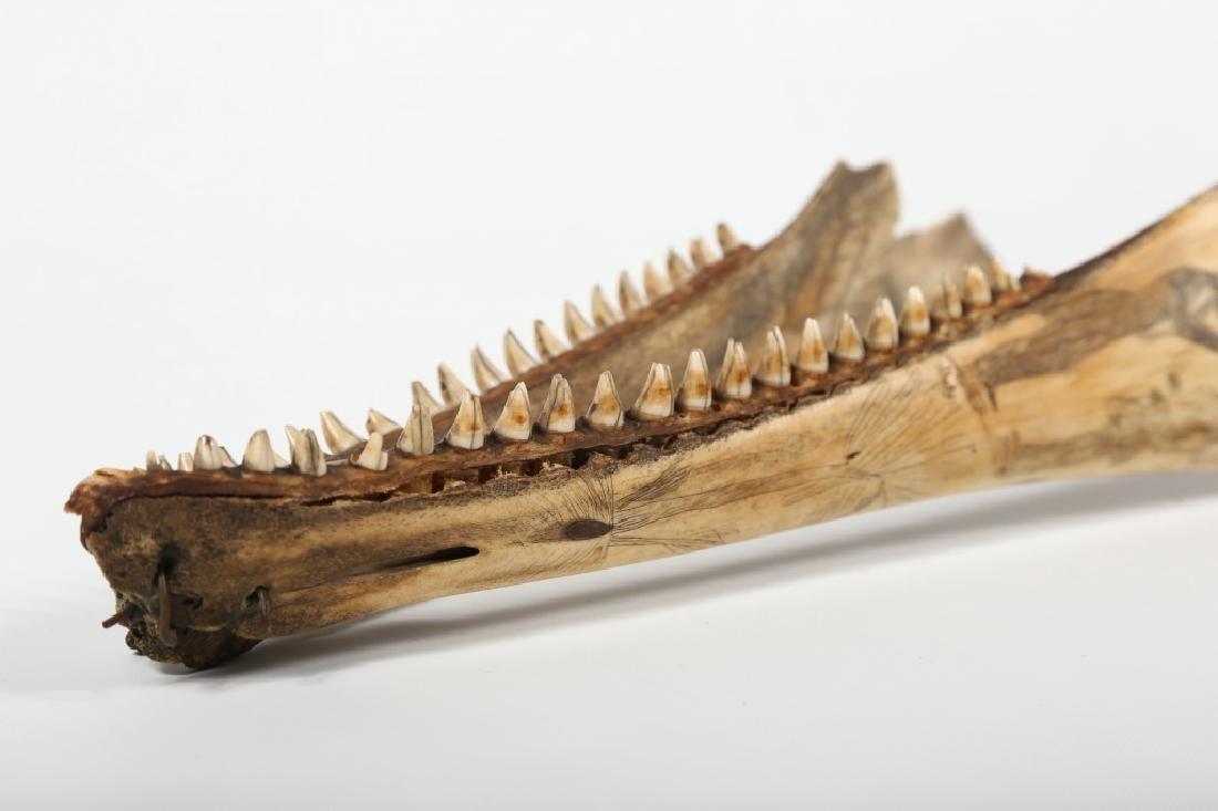 Fine Antique American Scrimshaw Carving on Bone - 6