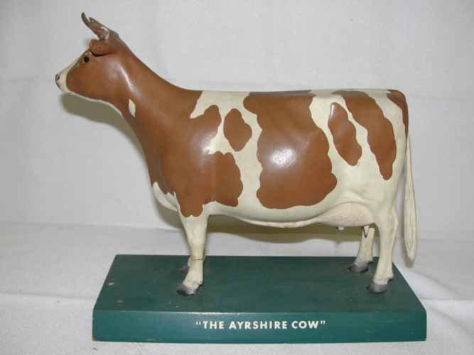 22: Ayrshire Advertising Cow