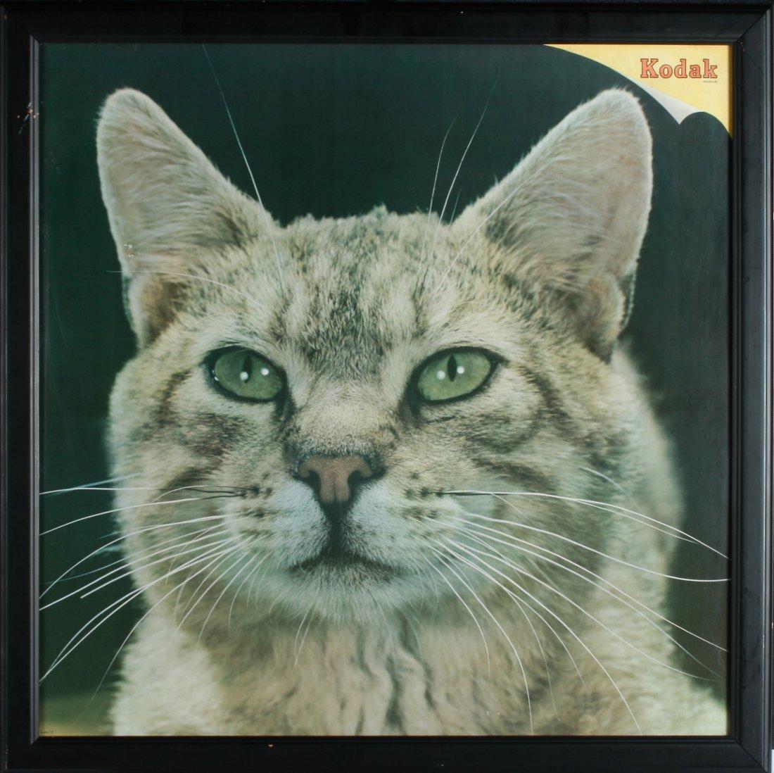 7: A Kodak Meow-ment