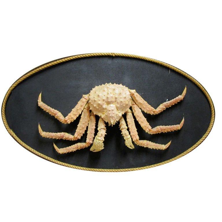 18: Giant King Crab
