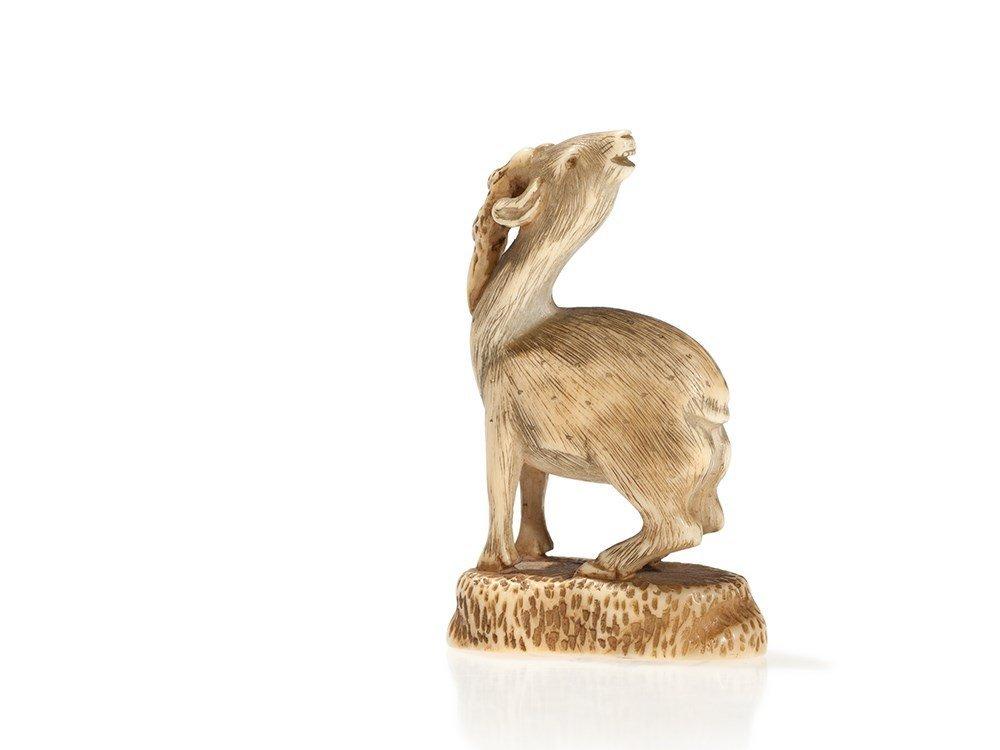 Signed Ivory Netsuke of a Fine Carved Sika Deer, Japan,