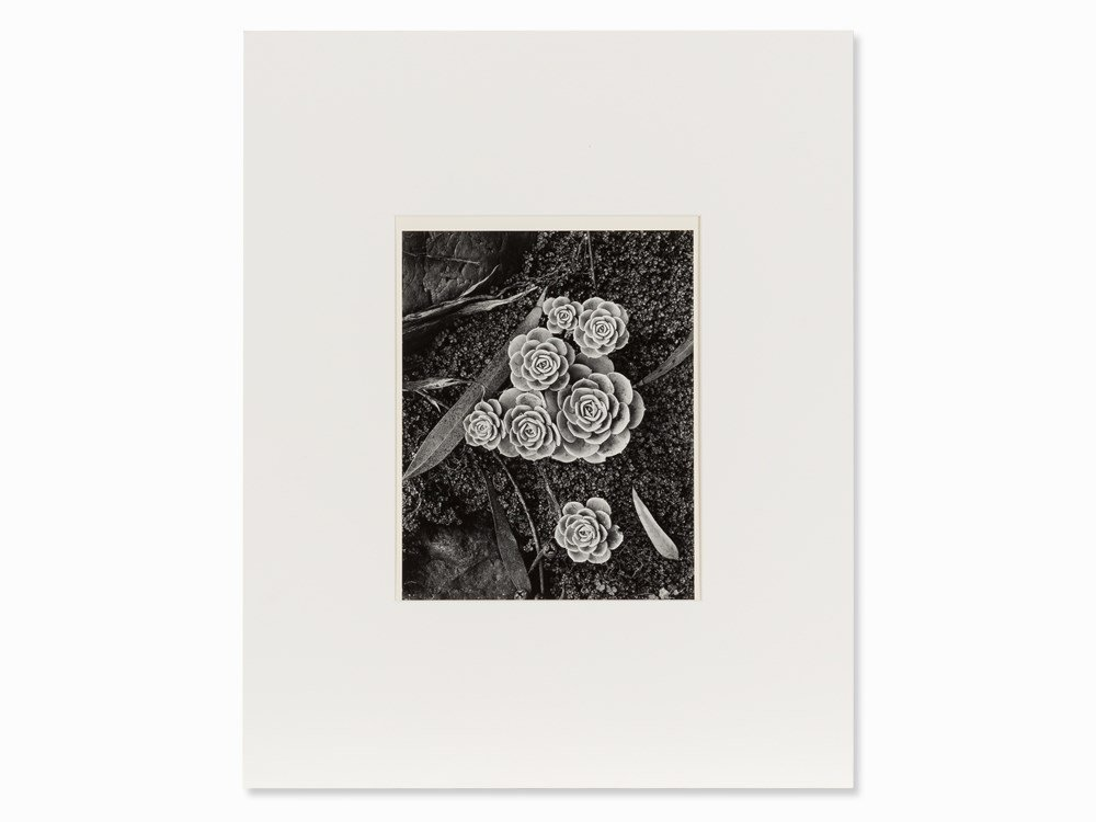 Brett Weston, Stone Crop Plants, Gelatin Silver, Sign.,