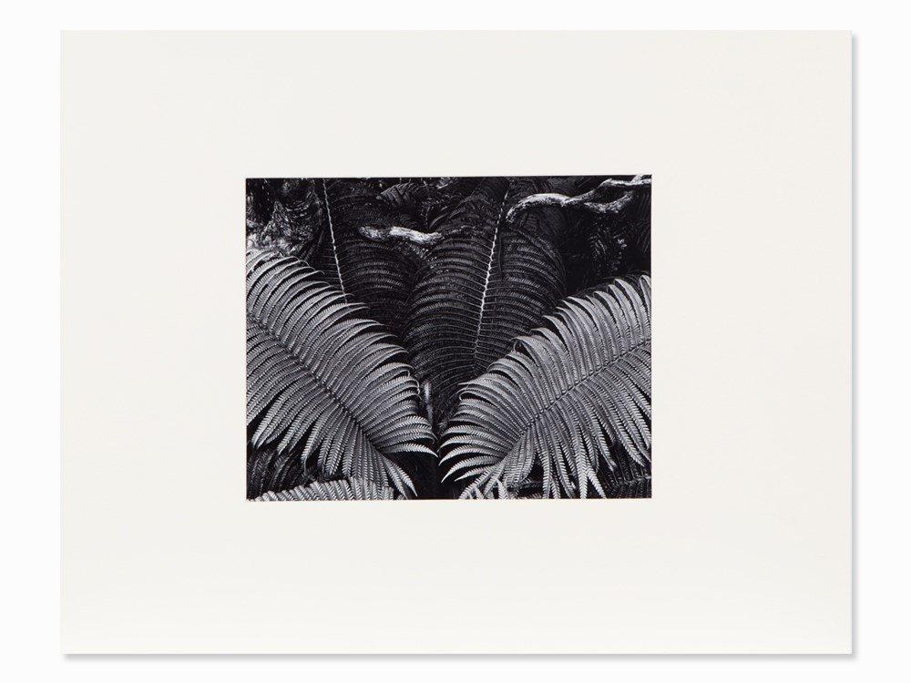 Ansel Adams, Farne. Maui, Signierte Fotografie, um 1947