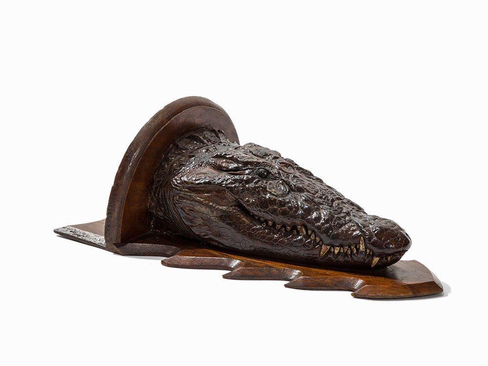 A Head Taxidermy of a Crocodile, England, c. 1900