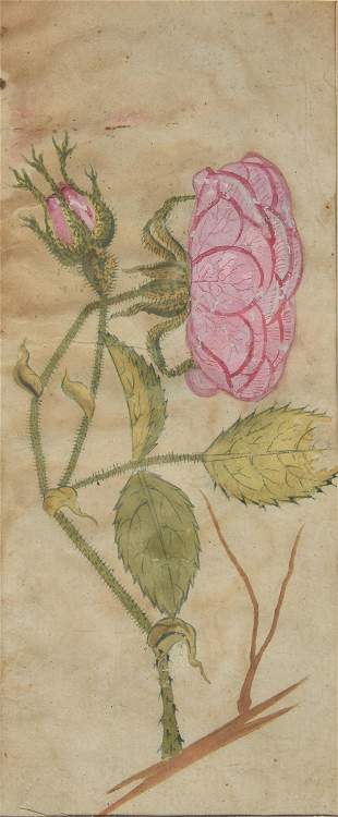 Two Persian or Ottoman flower studies