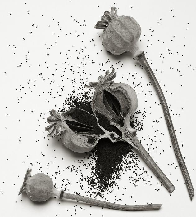 Richard Freestone (b.1951) Poppy Heads, 2013 Archi