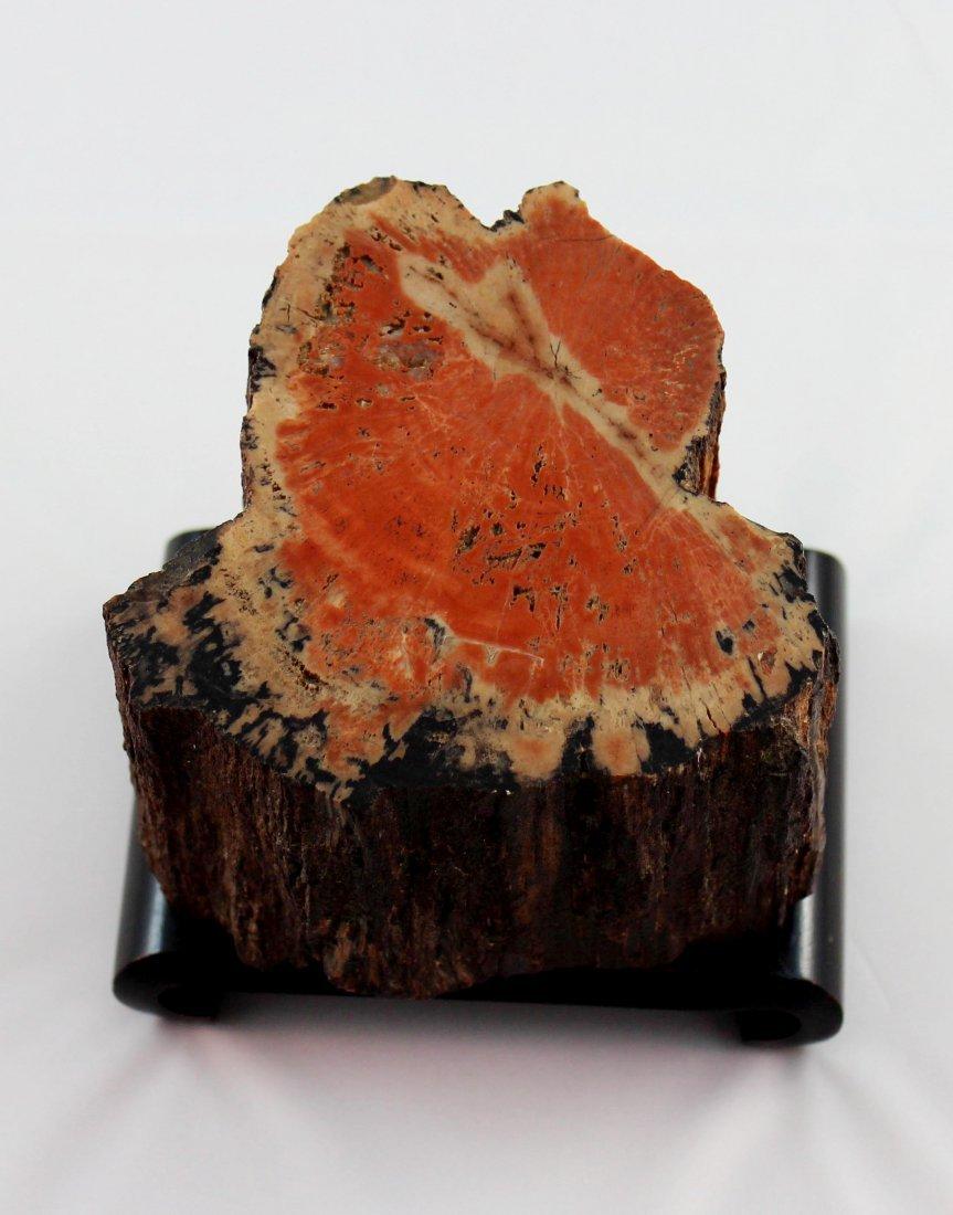 Fossil Wood - 2