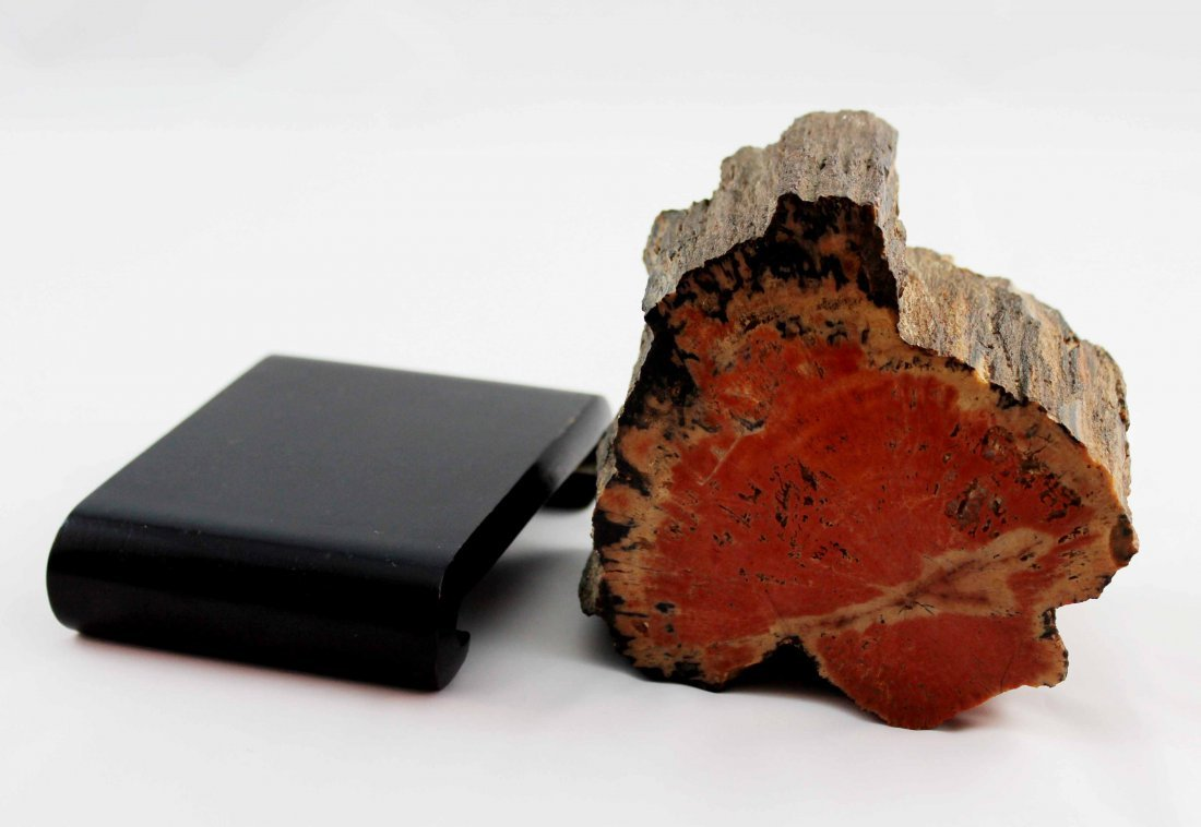 Fossil Wood - 5