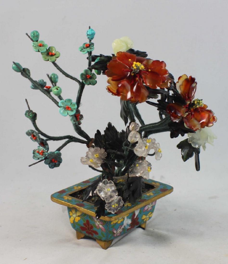 Chinese Jade Tree - 3