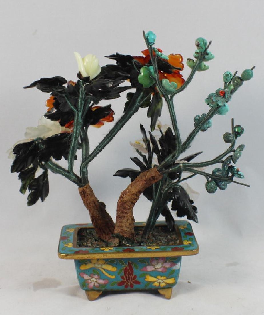 Chinese Jade Tree - 6