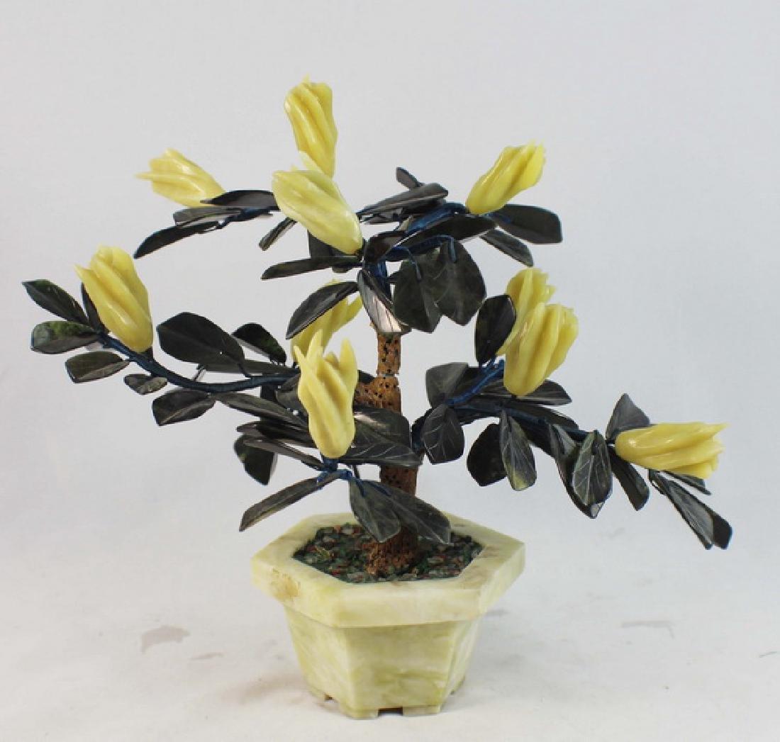 Chinese Jade Tree