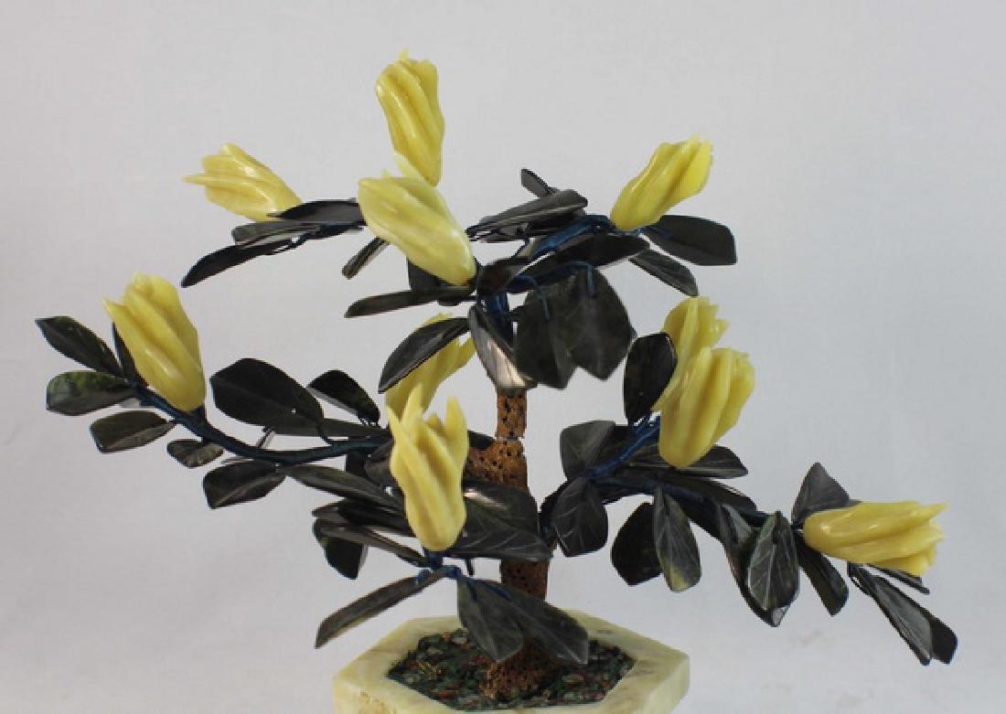 Chinese Jade Tree - 2