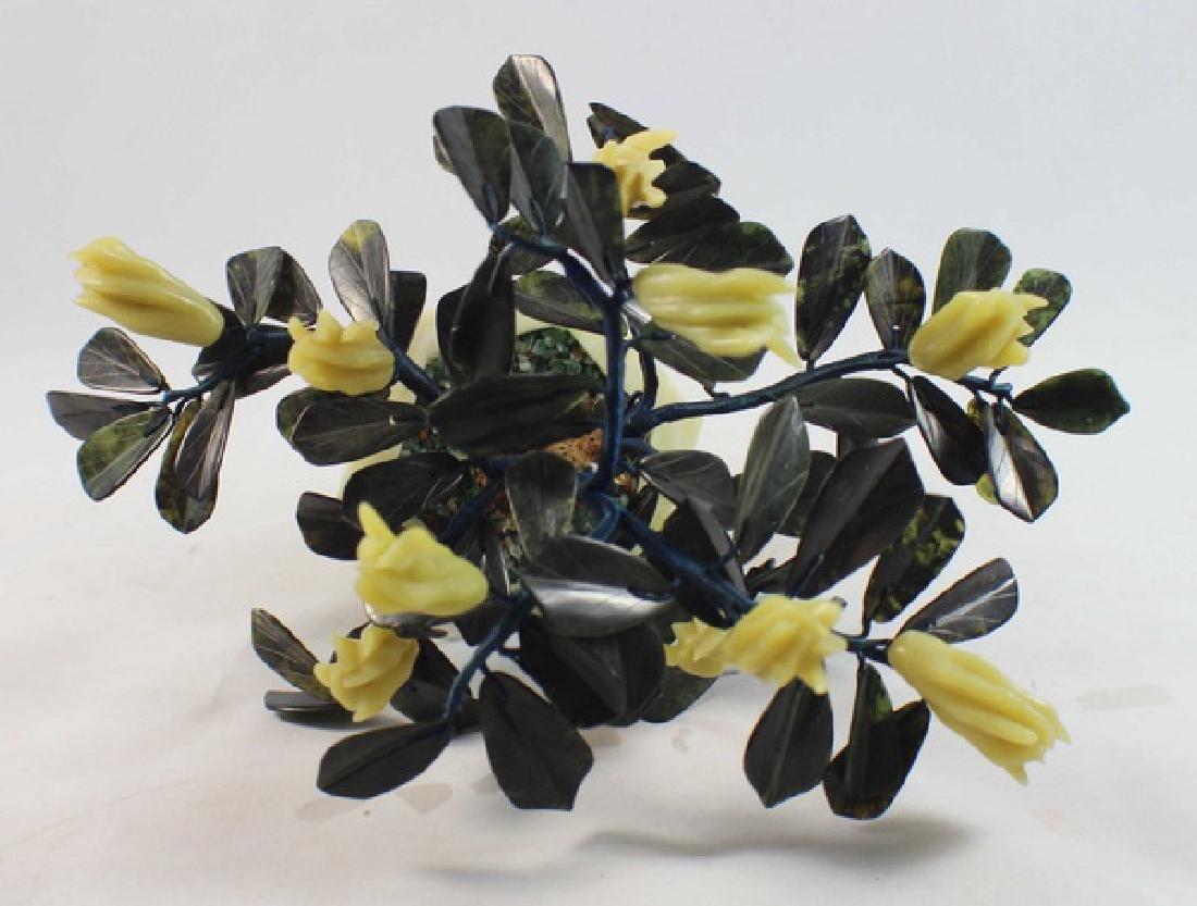 Chinese Jade Tree - 5