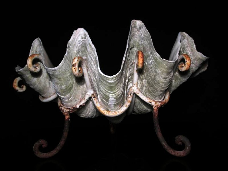 GIANT NATURAL CLAM SHELL W/ IRON STAND