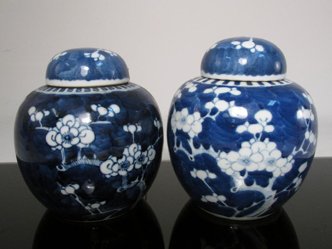 SIX CHINESE QING DYNASTY PRUNUS GINGER JARS - 6