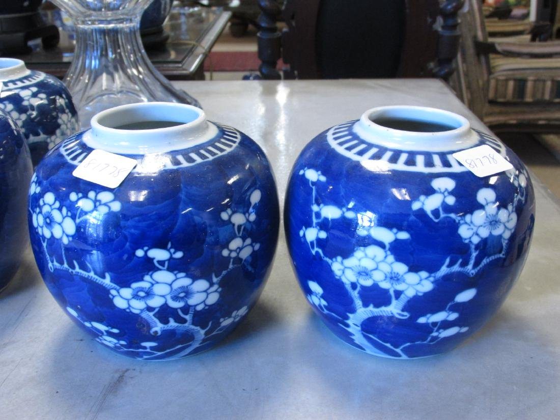EIGHT CHINESE QING DYNASTY PRUNUS GINGER JARS - 8