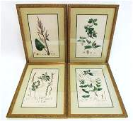 FOUR ANTIQUE HAND COLORED BOTANICAL ENGRAVINGS