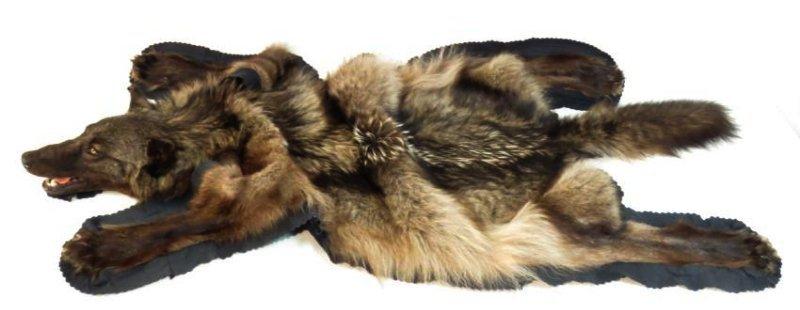 RARE CANADIAN DARK FUR WOLF SKIN TAXIDERMY RUG