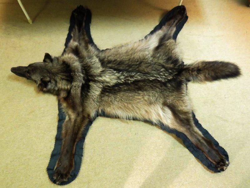 RARE CANADIAN DARK FUR WOLF SKIN TAXIDERMY RUG - 3