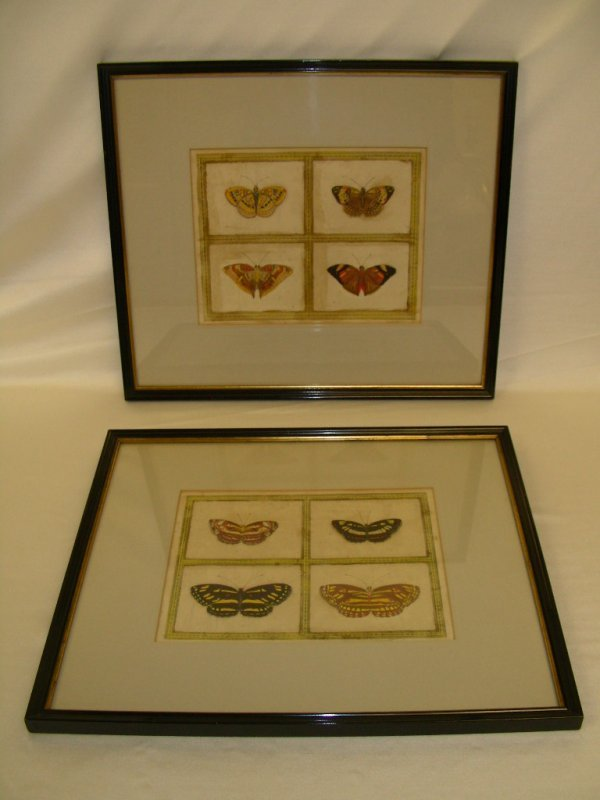 826: UNUSUAL 19TH C ENGRAVINGS BUTTERFLIES HAND PAINTED