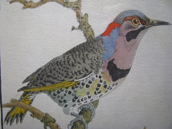 364: BENSON MOORE ORNITHOLOGICAL ENGRAVING W COLOR SGND
