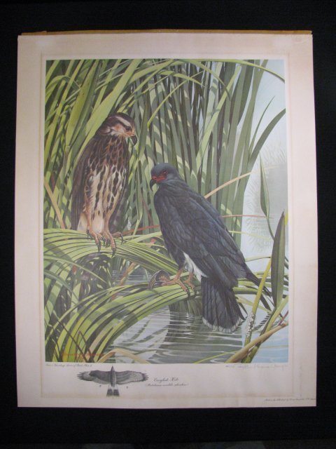 1237: RICHARD EVANS YOUNGER LTD LITHOGRAPH SIGNED PRINT