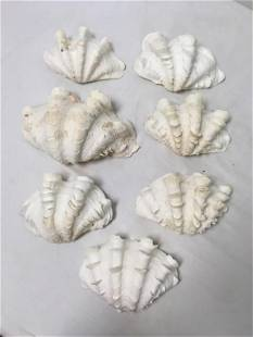 SEVEN LARGE NATURAL CLAM SHELL BOWLS
