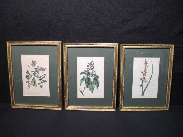 18: THREE FRAMED BOTANICAL FLORAL PRINTS
