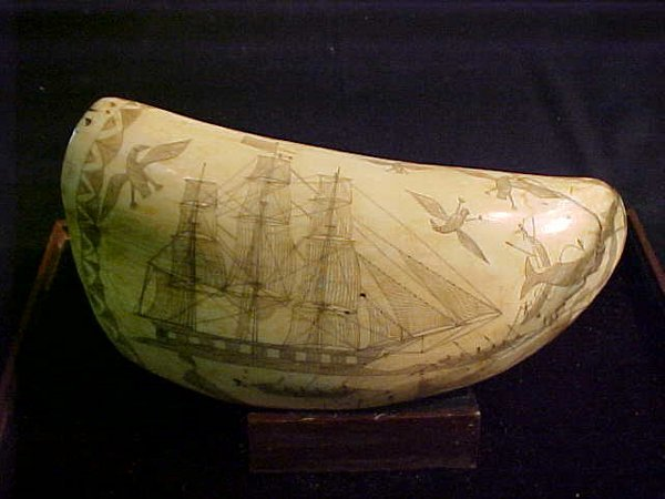 154: WHALES TOOTH SCRIMSHAW 1830 SEAGULL