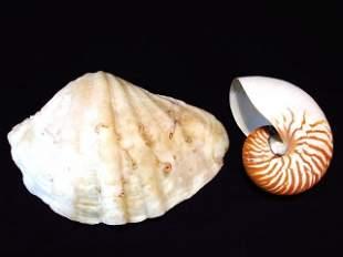 TWO LARGE SEA SHELLS - NAUTILUS & CLAM