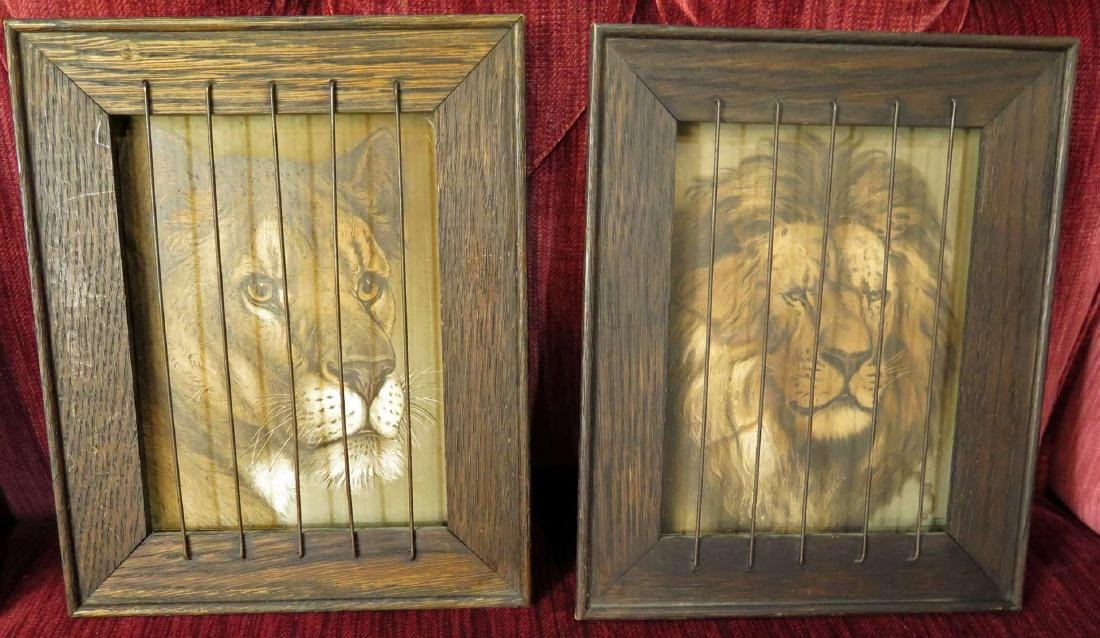 CIRCA 1900 CAGED LION SHADOWBOX FRAMED PRINTS - 2