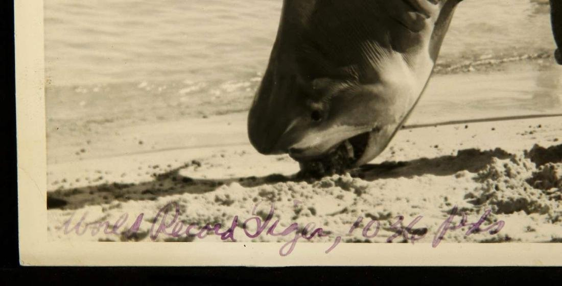 SIGNED ZANE GREY PHOTOGRAPH WITH TIGER SHARK - 6