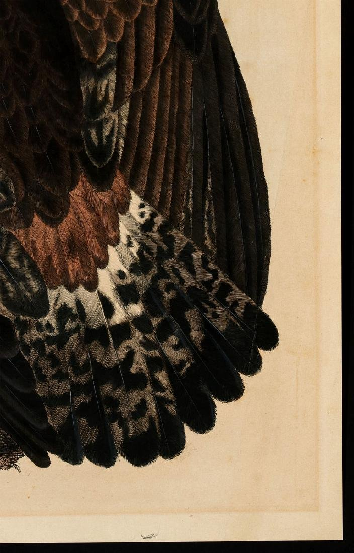 PRIDEAUX JOHN SELBY, GOLDEN EAGLE FEMALE, C. 1820 - 5