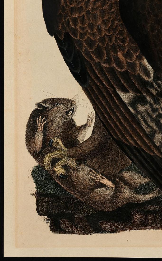 PRIDEAUX JOHN SELBY, GOLDEN EAGLE FEMALE, C. 1820 - 6